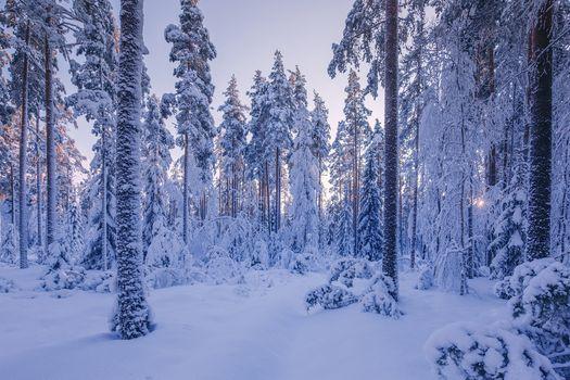 Бесплатные фото зима,лес,деревья,сугробы,снег,природа,пейзаж,зимний лес,закат