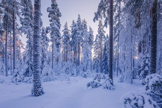 Фото бесплатно закат, снег, природа