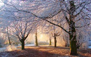 Фото бесплатно животные, осень, холод