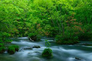 Бесплатные фото лес,деревья,река,панорама,природа,пейзаж,камни