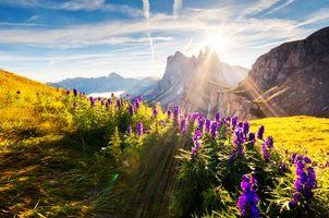 Фото бесплатно луг, цветы, облака