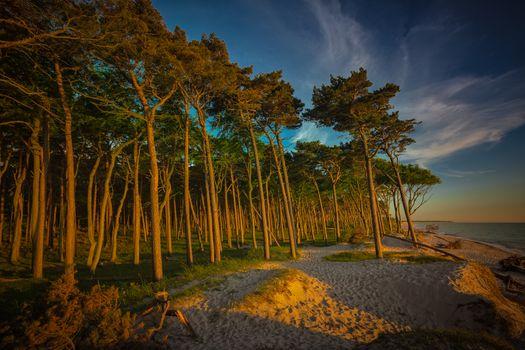 Бесплатные фото сосны,побережье,закат,West Beach,Zingst,Mecklenburg-Vorpommern,Germany