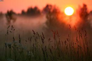 Заставки лес, трава, макро