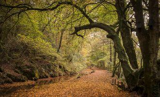 Бесплатные фото осень,лес,дорога,природа,осенние листья,пейзаж