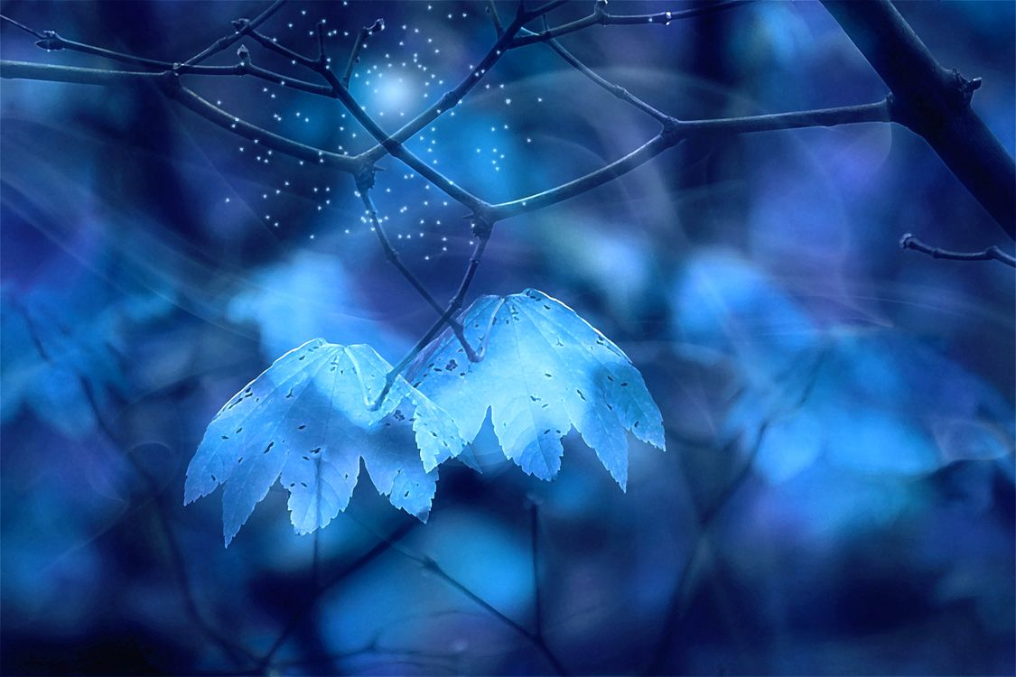 Фото бесплатно сказочный лес, ветки, листья - на рабочий стол
