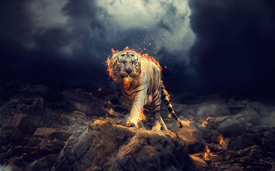 Photo free white tiger, fantasy, fire