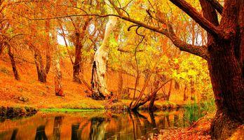 Фото бесплатно пейзаж, сезон, дерево