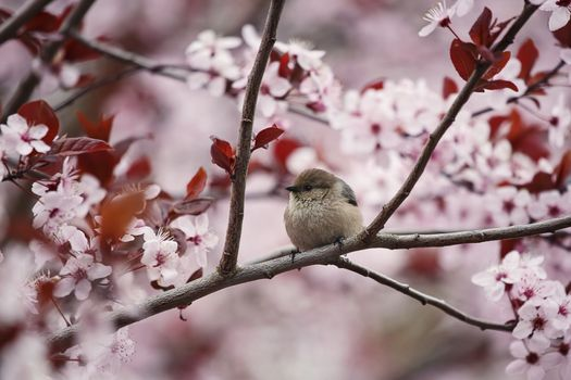 Фото бесплатно птица, вишня, ветки