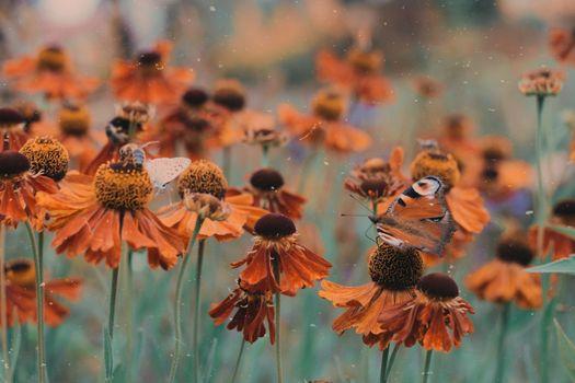 Фото бесплатно goro, green, orange