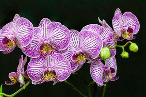 Photo free orchids, flora, black background