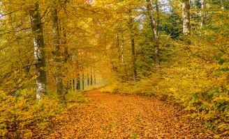 Заставки цвета осени, осень, пейзаж