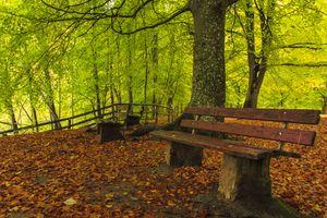 Заставки Парк, осенние листья, природа