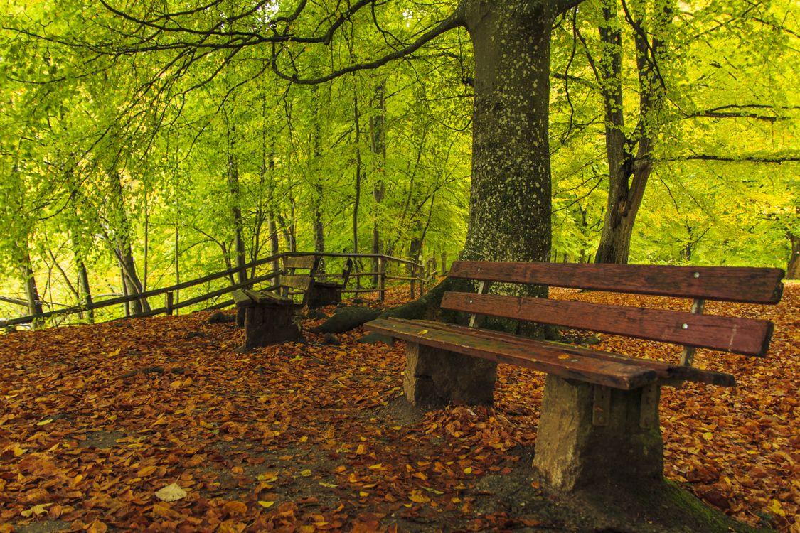 Обои Парк, осенние листья, природа картинки на телефон