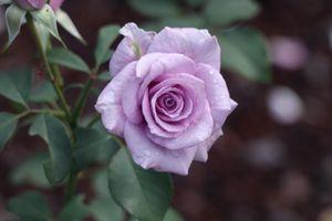 Фото бесплатно цветочная композиция, цветение, цветы