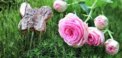 Фото бесплатно флора, мох, цветок