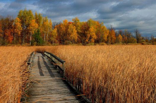 Photo free autumn, bridge, dry