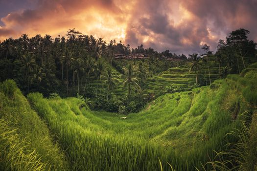 Photo free Bali rice terrace Ubud, Tegalalang, Bali