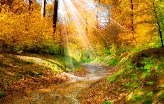 Photo free walkway, leaves, autumn