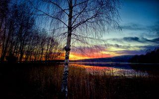 Бесплатные фото Река Ангерман,Крамфорс,Швеция закат,деревья,небо,природа,пейзаж
