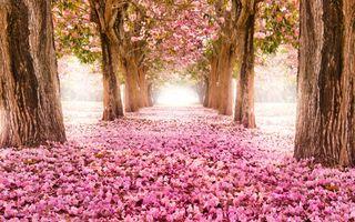 Фото бесплатно аллея, цветение, боке