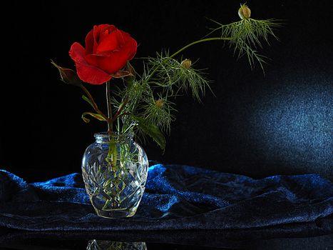 Фото бесплатно бархат, ваза, цветок