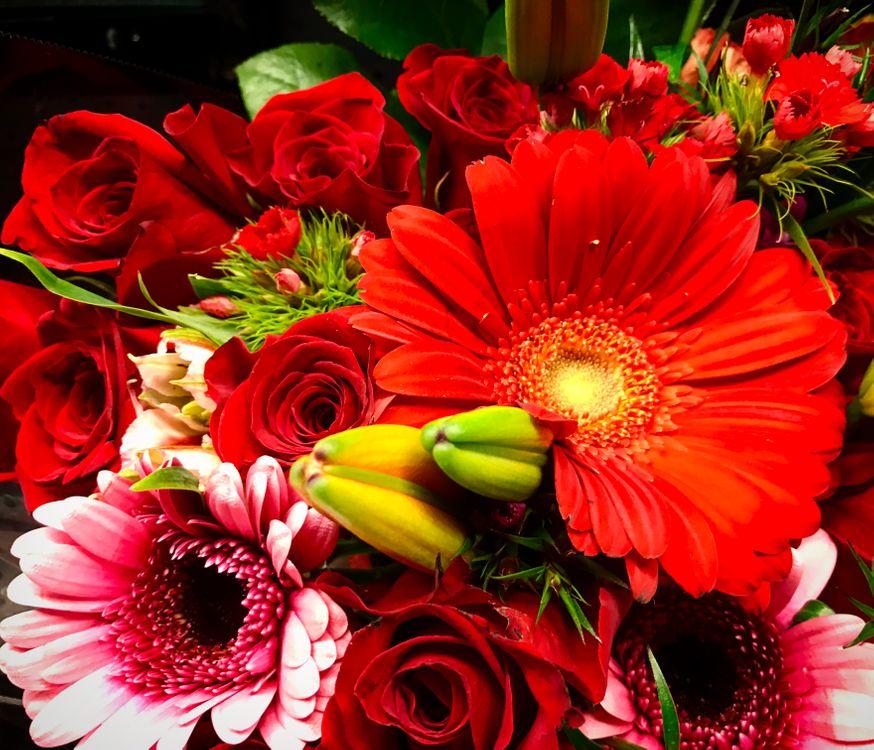 Красота цветов · бесплатное фото