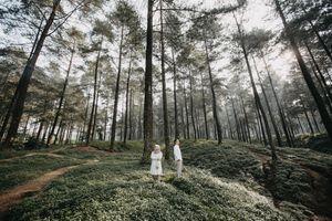 Бесплатные фото человек,мужчина,женщина,дерево,лес,на улице,вместе
