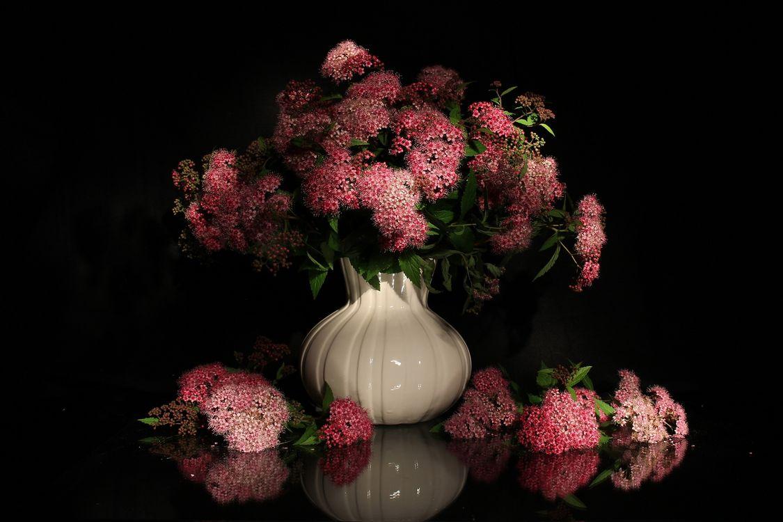 Легкие цветы · бесплатное фото