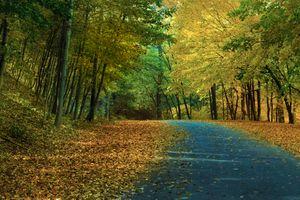 Заставки дорога, парк, осень цвета
