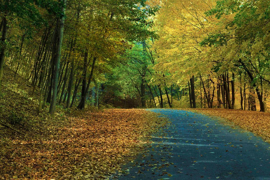 Обои дорога, парк, осень цвета картинки на телефон