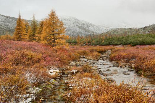 Autumn creek · free photo