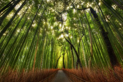 Photo free bamboo, forest, landscape
