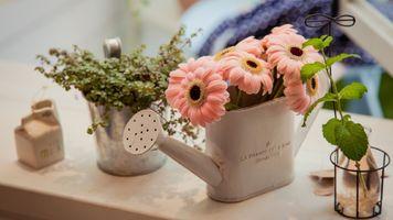 Photo free decor, watering can, gerbera