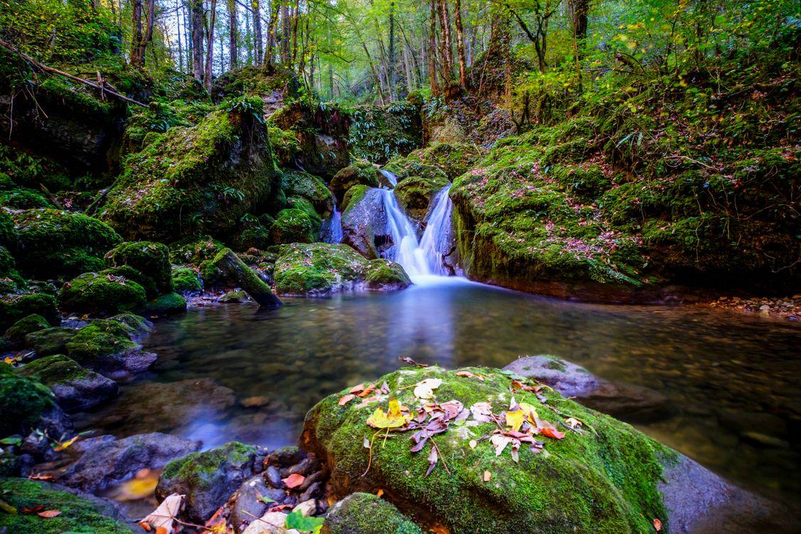 Фото бесплатно зеленый, природа, река - на рабочий стол