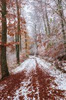 Бесплатные фото осень,парк,лес,дорога,деревья,тропинка,краски осени