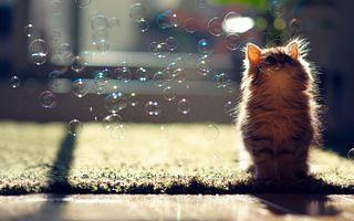 Заставки животные, мыльные пузыри, кошки