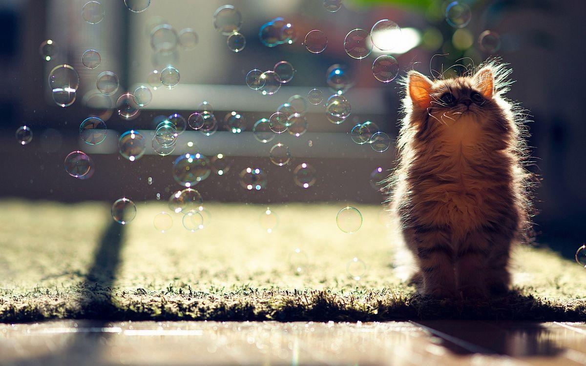 Фото бесплатно животные, мыльные пузыри, кошки - на рабочий стол