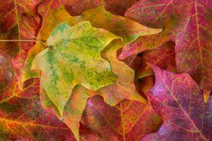Бесплатные фото осень,осенние листья,краски осени,природа