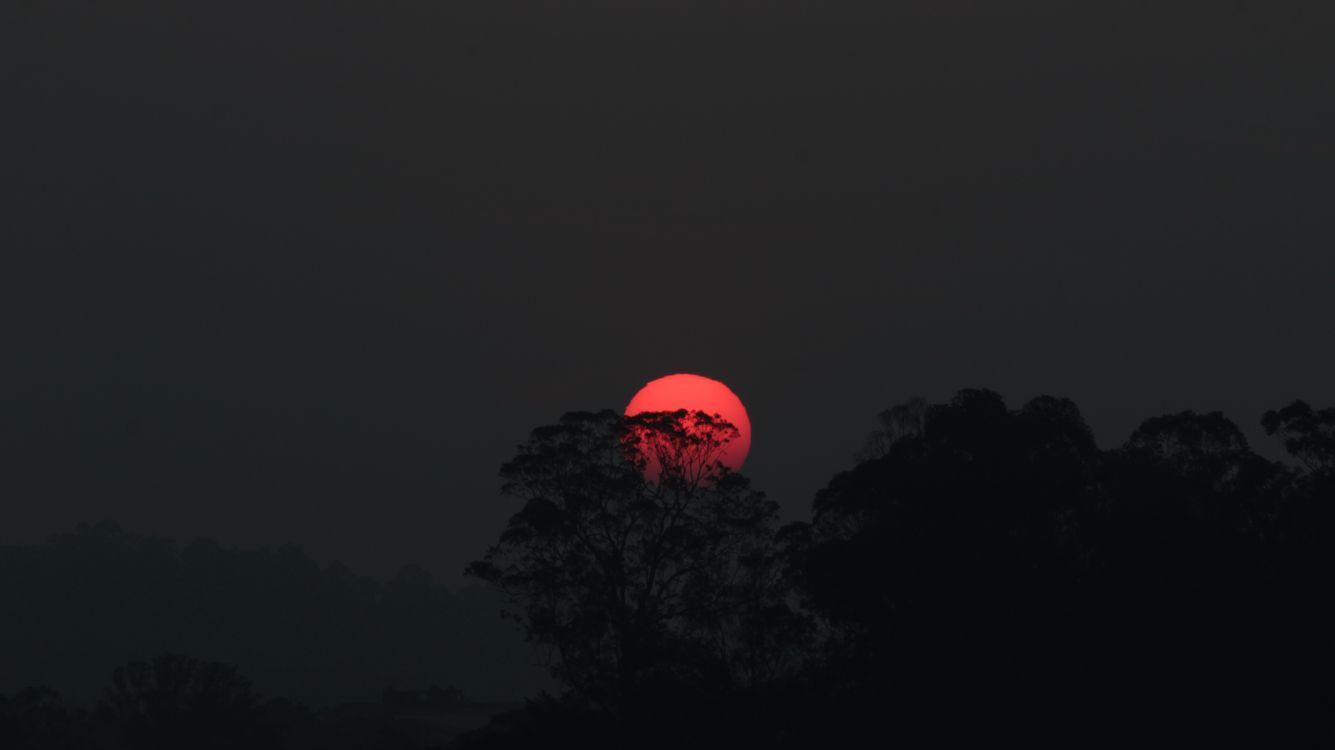 Фото бесплатно закат, деревья, пейзаж, красная луна, пейзажи