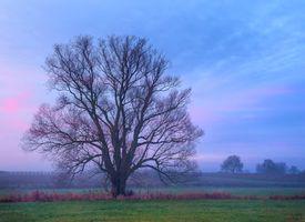 Фото бесплатно небо, трава, природа