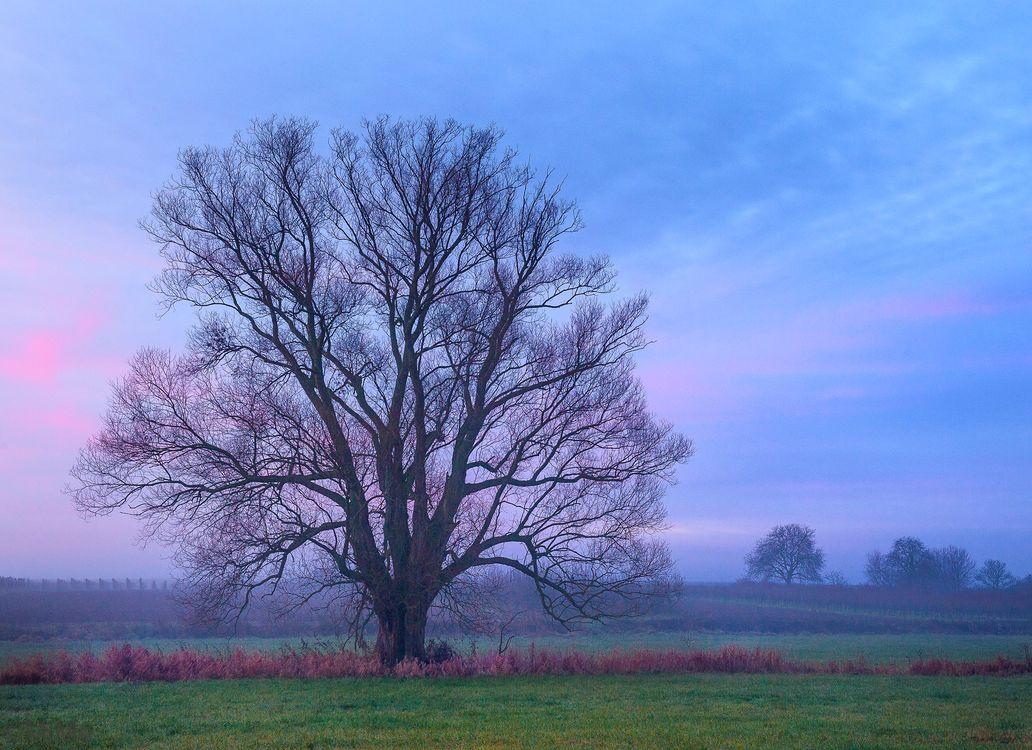 Фото бесплатно небо, трава, природа - на рабочий стол