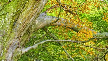 Фото бесплатно дерево, растительность, экосистемный