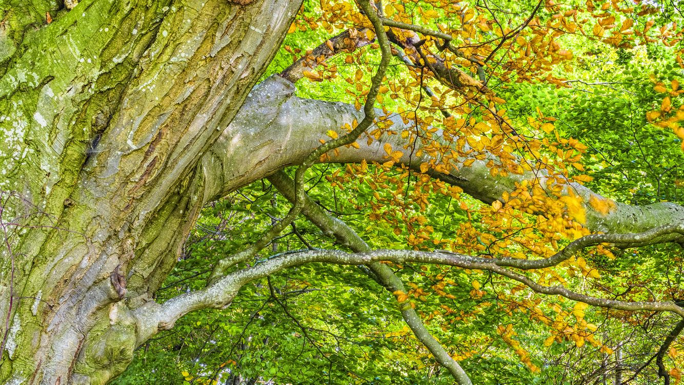 Обои дерево, растительность, экосистемный, филиал, лист, лесистая местность, лиственный, естественный запас, умеренный широколиственный и смешанный лес, растущий старый лес, хобот, лес, флора, растение, осень, биома, мох, бессосудистое растение земли, роща, тропические леса, трава, вальдивийский умеренный тропический лес, умеренный хвойный лес, джунгли, клен на телефон | картинки природа - скачать
