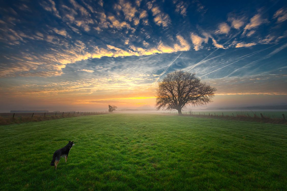 Фото бесплатно поле, рассвет, закат, туман, дерево, трава, собака, небо, пейзаж, пейзажи