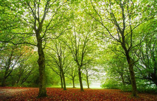 Photo free trees, Park, early autumn
