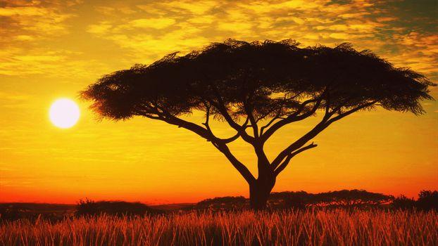 Photo free Savana, tree, sunset