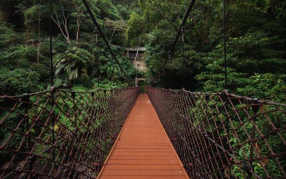 Заставки trees,hanging,bridge
