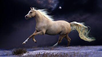 Заставки Луна, лошади, небо