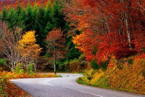 Фото бесплатно осень, красочно, падение листьев