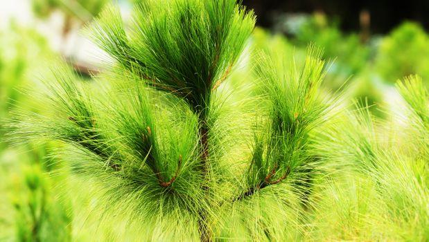 Фото бесплатно мини-дерево, зеленое, близко